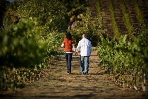 Sonoma Vineyard Walk